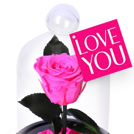 Mini Rosa Encantada Pink I Love You