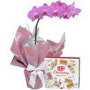 Orquídea Phalaenopsis Pink e Kit Kat I Love Gringos