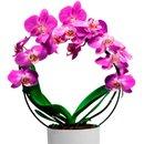 Orquídea Arco Pink Vovó Eu Te Amo