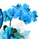 Orquidea Phalaenopsis Azul e Balão Vô Eu Te Amo