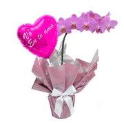 Orquidea Phalaenopsis Lilás e Balão Vó Eu Te Amo Pink