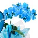 Orquidea Phalaenopsis e Balão Pai  Eu Te Amo Azul
