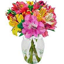 Admiração Colorido no Vaso